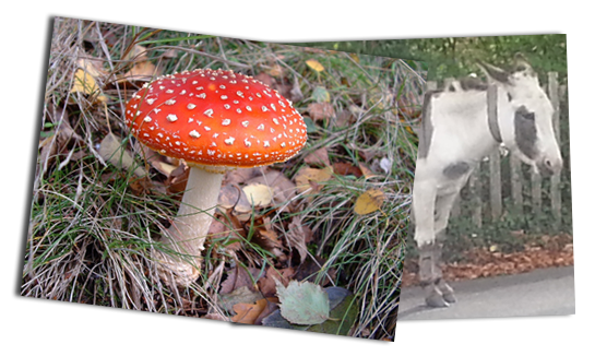 Red toadstool and donkey in the New Forest